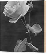 One Rose In Black And White Wood Print