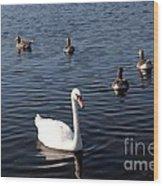 One Swan Six Ducks Wood Print
