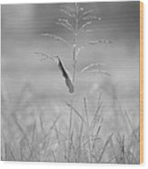 One Tall Blade Of Grass On A Foggy Morn - Bw Wood Print