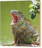 Open Mouth Iguana Wood Print