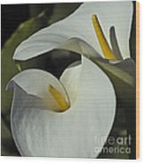 Open White Calla Lily Wood Print