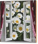 Open Windows Onto Large Daisies Wood Print