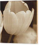 Opening Tulip Flower Sepia Monochrome Wood Print