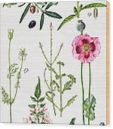 Opium Poppy And Other Plants  Wood Print by  Elizabeth Rice