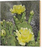 Opuntia Opuntia Sp Cactus Flowering Wood Print