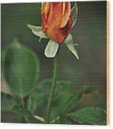 Orange And Yellow Rose Wood Print