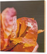 orange Bougainvillea Wood Print
