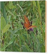 Orange Butterfly Wood Print by Beverly Hammond