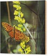 Orange Butterfly On Yellow Wildflower Wood Print