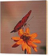 Orange Butterfly Orange Flower Wood Print