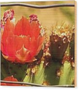 Orange Cactus Flower With Fence Wood Print