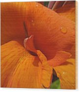 Orange Canna Wood Print
