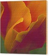 Orange Corolla Wood Print