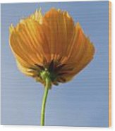 Orange Cosmos Too Wood Print