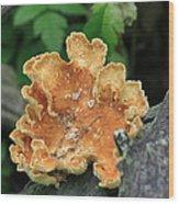 Orange Cup Wood Print