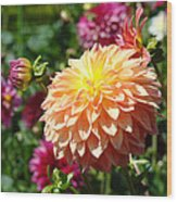 Orange Dahlia Flower Floral Fine Art Photography Wood Print by Baslee Troutman