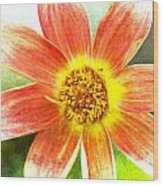 Orange Dahlia On Green Wood Print