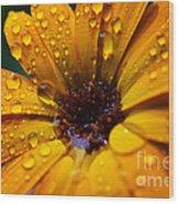 Orange Daisy In The Rain Wood Print