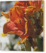 Orange Day Lilies In The Sun Wood Print