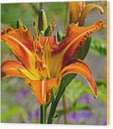 Orange Day Lily Wood Print