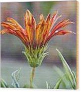 Orange Gerber 3 Wood Print