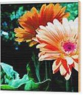 Orange Gerber Daisies Wood Print