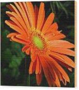 Orange Gerber Wood Print