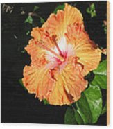 Orange Hibiscus After The Rain 1 Wood Print