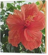 Orange Hibiscus Wood Print