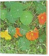 Orange Ivy Wood Print
