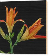Orange Lily On Black Wood Print