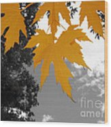 Orange Maple Leaves Wood Print