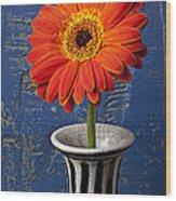 Orange Mum Wood Print by Garry Gay