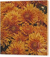 Orange Mums Wood Print