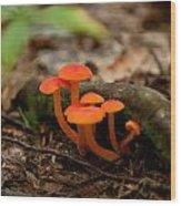 Orange Mushrooms Wood Print