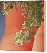 Orange Pots Of The Jardin Marjorelle Morocco Wood Print