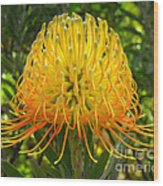 Orange Protea Flower Art Wood Print by Rebecca Margraf