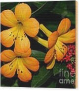 Orange Rhododendron Flowers Wood Print