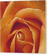 Orange Rose Close Up Wood Print