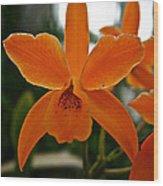 Orange Sherbert  Orchid Wood Print