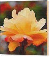Orange Sherbet Wood Print