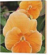 Orange Sickle Pansies Wood Print