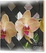Orange Striped Orchids Wood Print