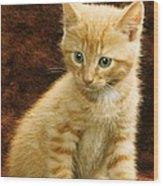 Orange Tabby Mixed Breed Kitten  Wood Print