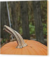 Orange Top Wood Print