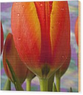 Orange Tulip Close Up Wood Print by Garry Gay