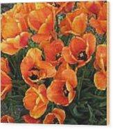 Orange Tulips Wood Print