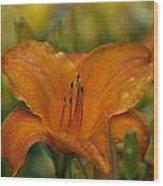 Orange Uglad Wood Print