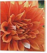 Orange Vanilla Dahlia Wood Print