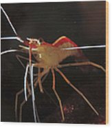 Orange White And Red Shrimp, Bali Wood Print